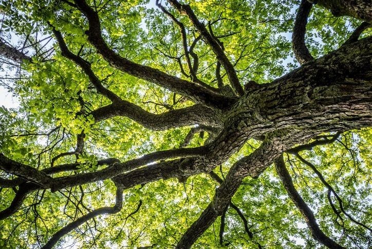 looking-up-at-a-tree-the-grove-frisco-tx.jpg