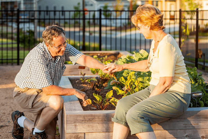 Senior couple gardening a raised garden bed
